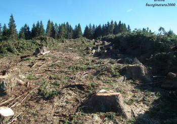 Fiind complici cu totii la distrugerea Romaniei, padurile Parcului Natural Bucegi dispar legal sub drujbe! Institutiile statului avizeaza favorabil defrisarile!