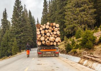 Pădurile din BUCEGI tăiate fără milă