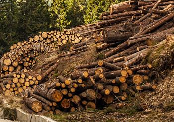 2 decembrie. Tăietori de păduri fugiţi unde vedeţi cu ochii! AGENT GREEN
