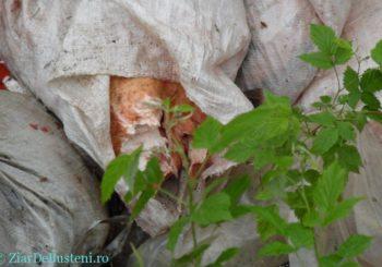 Dezastru în Buşteni la marginea Parcului Natural Bucegi – Valea Cerbului